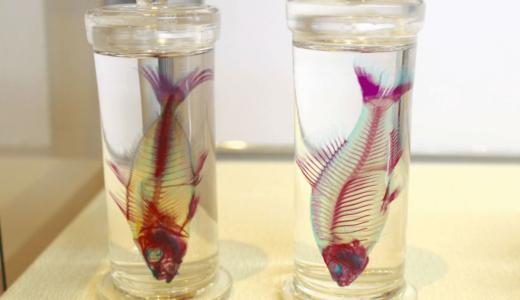 新世界「透明標本」展@高知県立美術館で見た骨格美